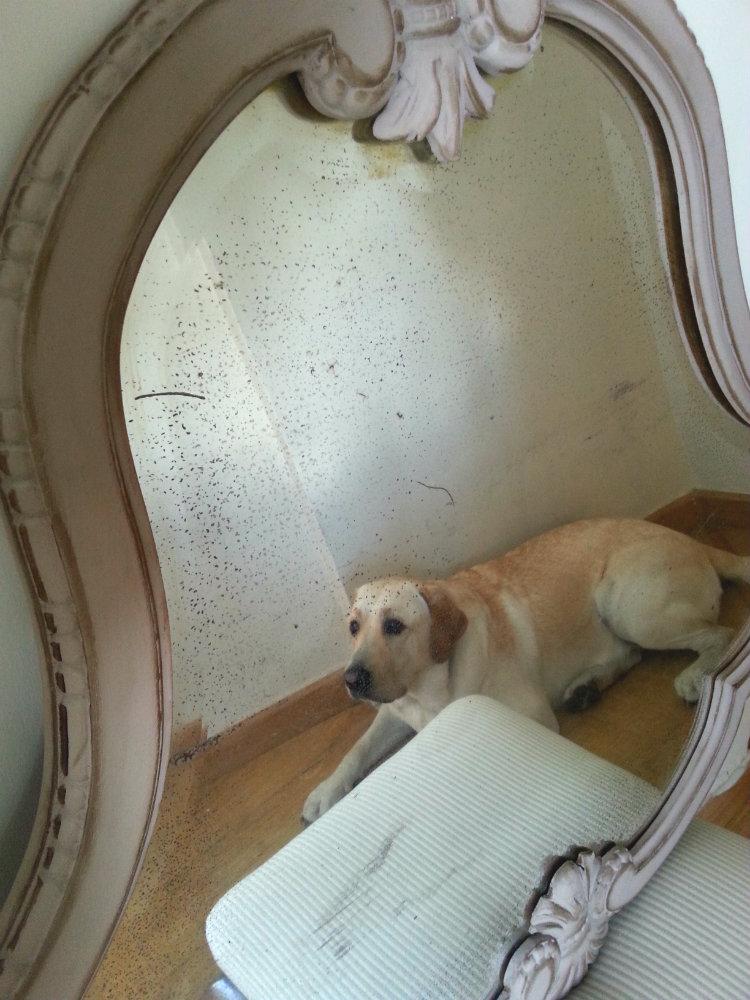 Restauración espejo barroco y Sam