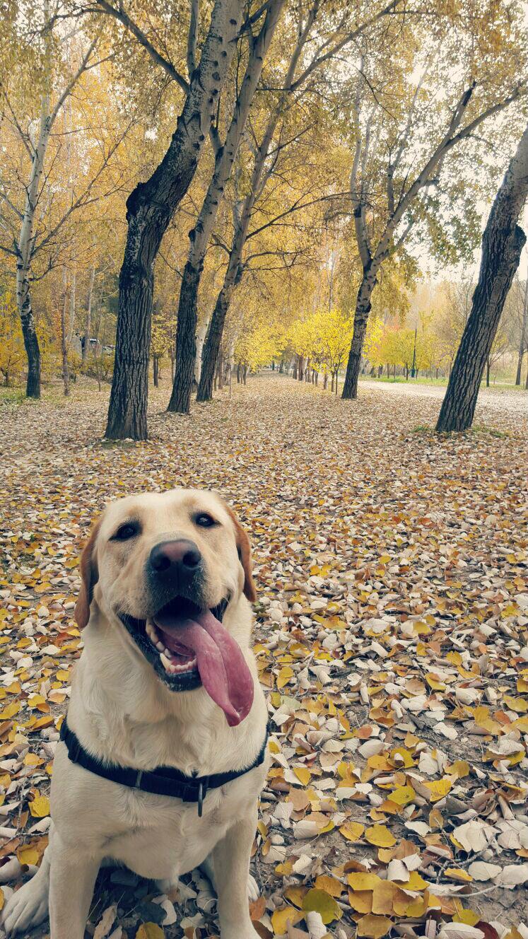 Pasear con tu perro, de obligación a afición