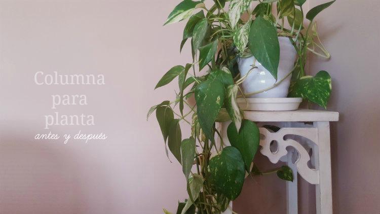 Columna para planta. Antes y después