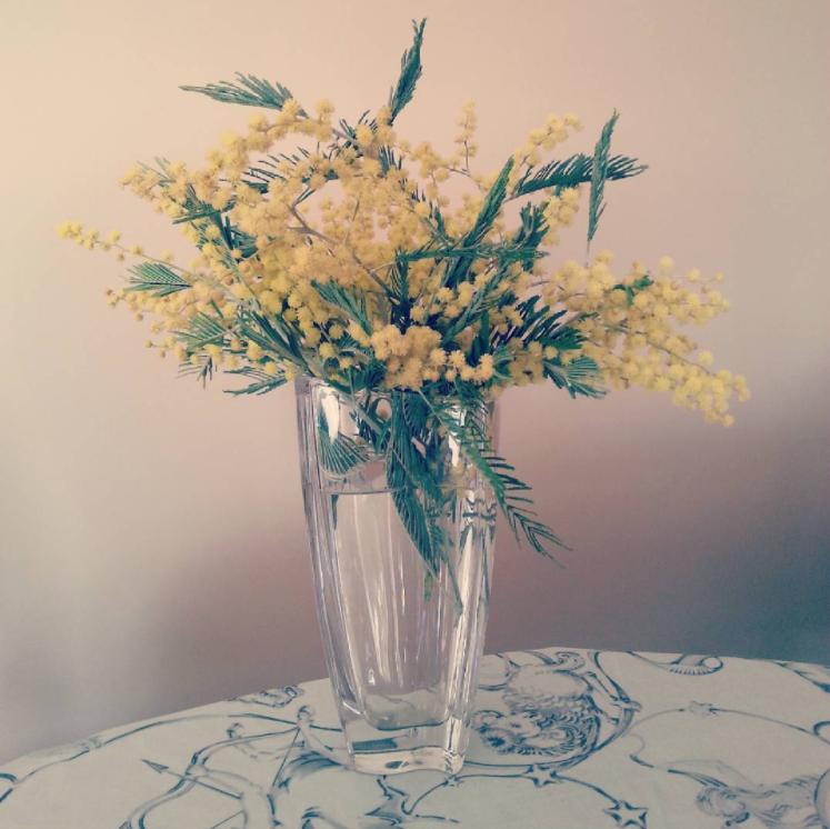 Mimosas en jarrón