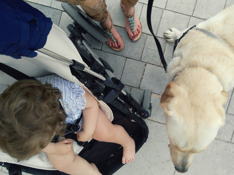Compaginar la vida familiar con perro y bebé